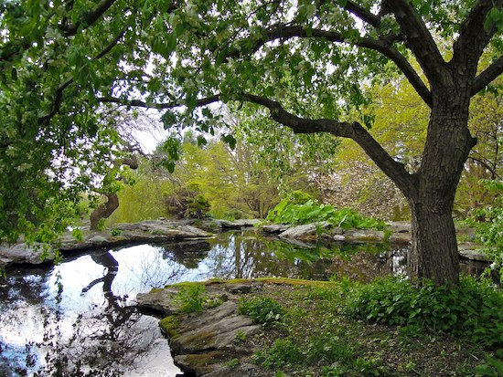 Tree and pond, Stonecrop Gardens, Cold Spring, NY. Photo by Naomi Sachs