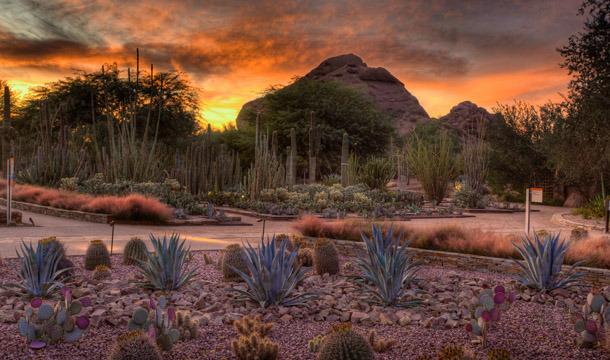 Desert Botanic Garden, Phoenix, AZ. Ottosen Entry Garden. Photo Courtesy Of  Desert