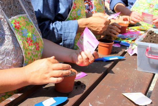 Planting in Romania healing garden