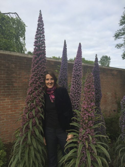 Naomi Sachs with Echium genera (Tower of Jewels), Chicago Botanic Garden. Photo by Rob Hoover