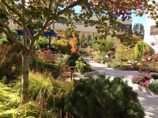 What is a Healing Garden? « Therapeutic Landscapes Network