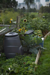 Charlie Hopkinson allotment garden UK