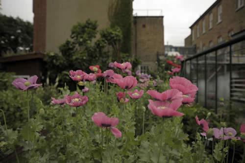 Charlie Hopkinson allotment garden UK